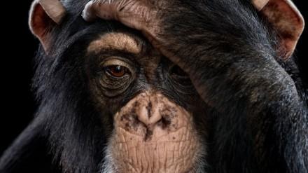 Robotai juda aplinkoje mėgdžiodami primatus