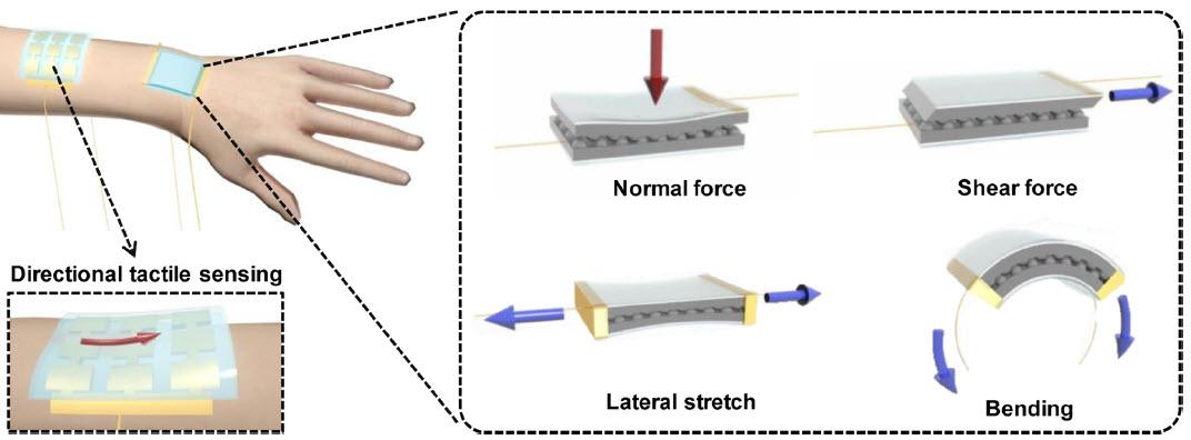 Elektroninės odos veikimas / American Chemical Society iliustracija
