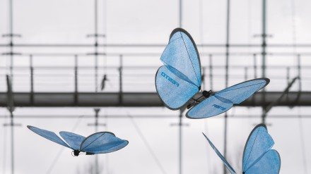 Festo drugeliai