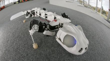 Pleurobot