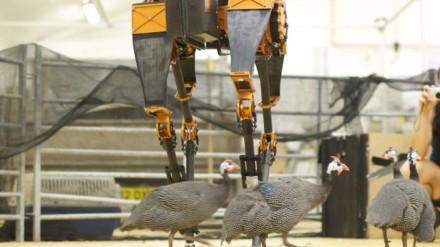 ATRIAS dvikojis robotas / OSU nuotr.