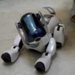 Sony robotinis šuo / youtube.com stop kadras
