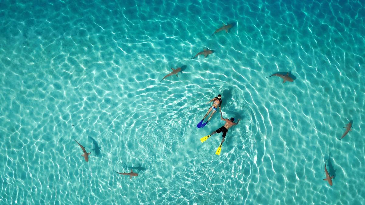 Nardymas su rykliais