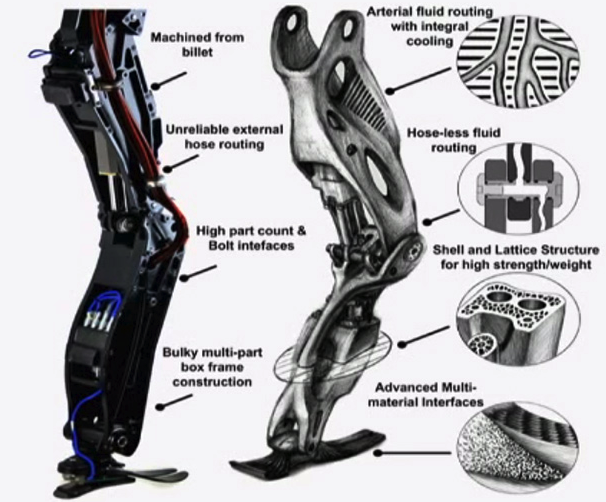 Atlas kojos