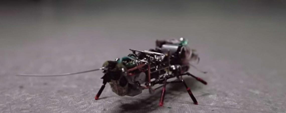 Robotas tarakonas