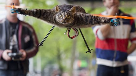 Katė dronas